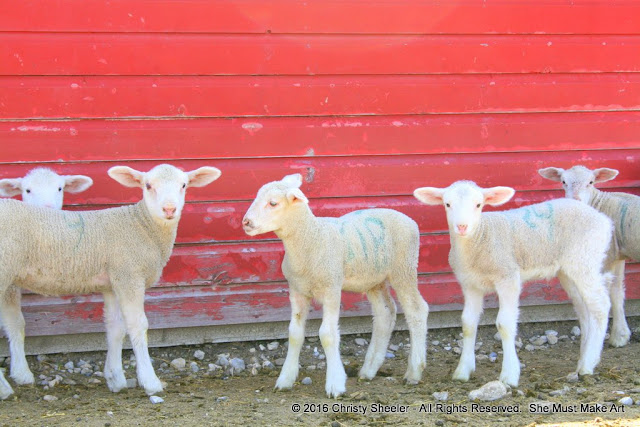 Art photo reference of baby lambs for artwork, 2 of 3.