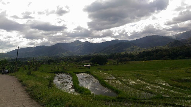 rice field comes with the majestic mountains