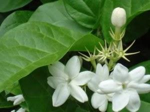 Obat Herbal Untuk Sakit Mata
