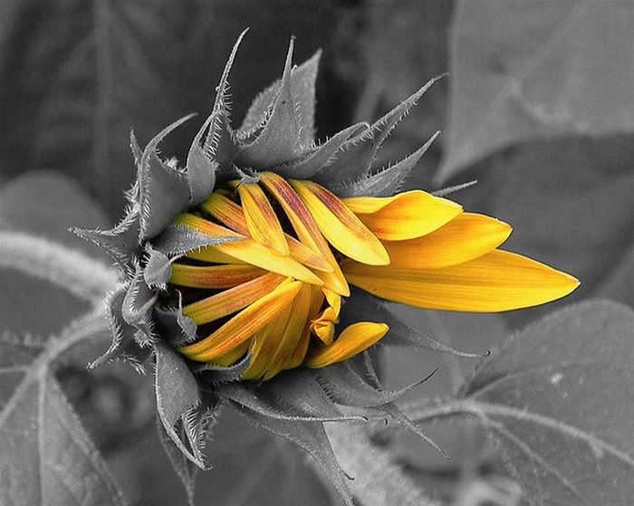 Fresh Pics: 50 Beautiful Examples of Selective Color ...