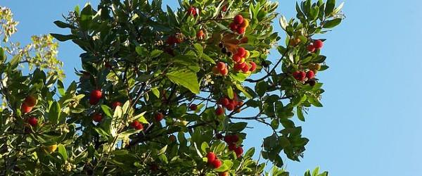 فوائد الفراولة،فوائد الرمان،فوائد الفواكه،الصحة والرجيم،الرشاقة