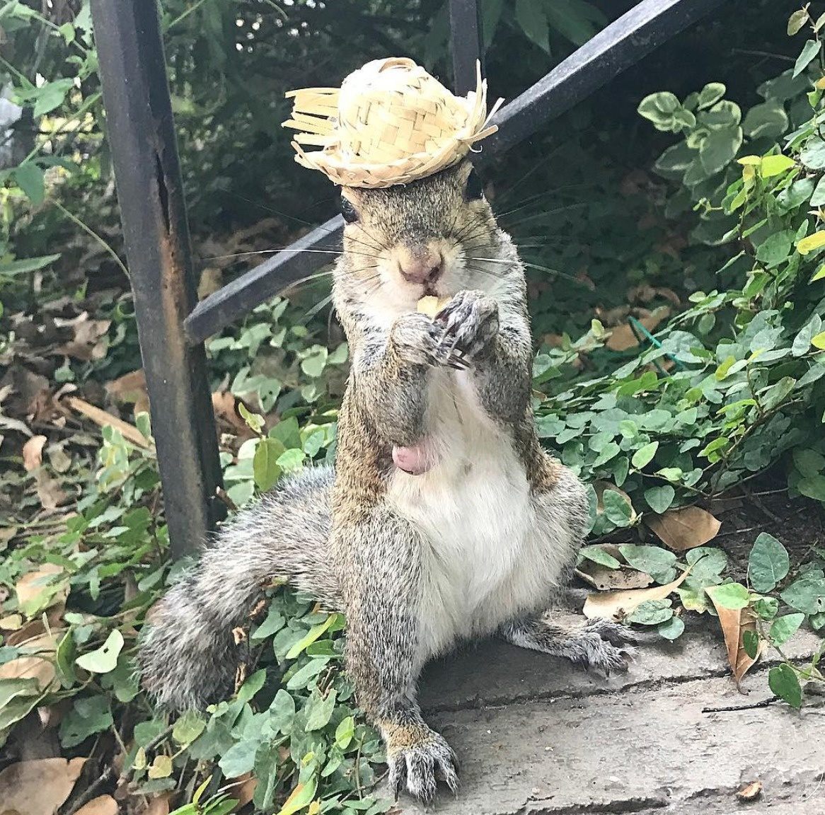 squirrel bella spent too much time with her adoptive family
