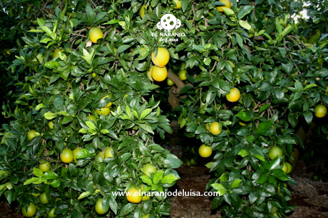 naranjas-online