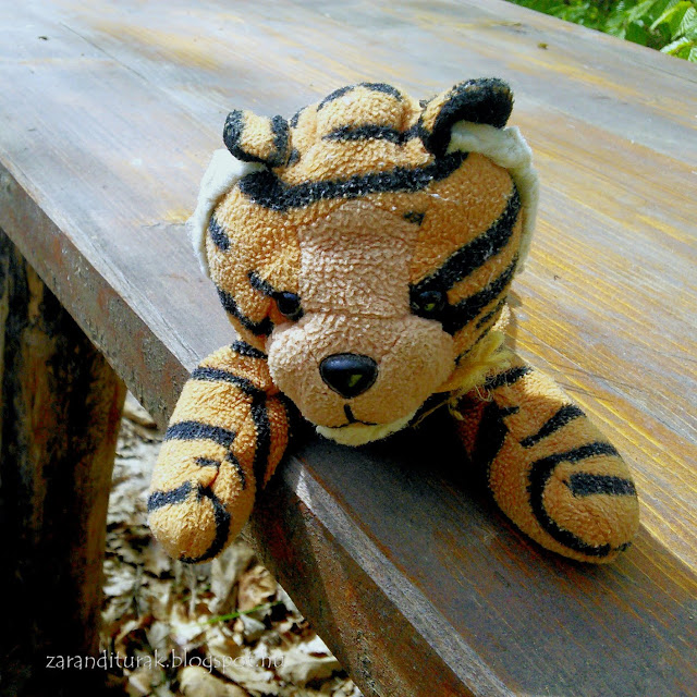 Tigriske egy turista pihenő asztalán a Zarándi-hegységben