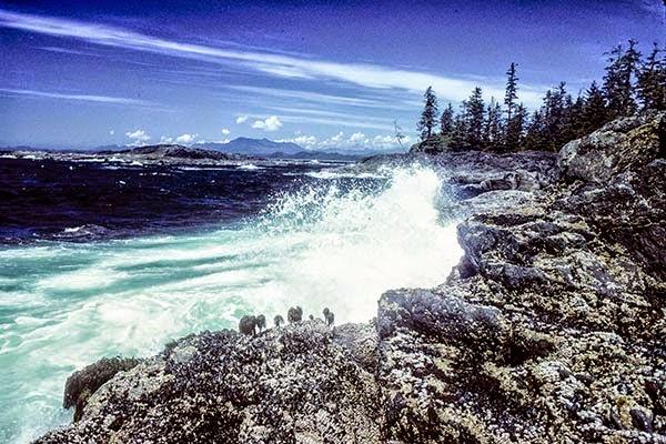 Pacific Rim Rocks
