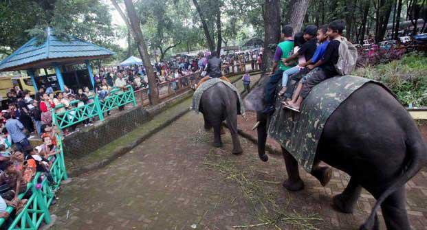 Kebun Binatang di Bandung