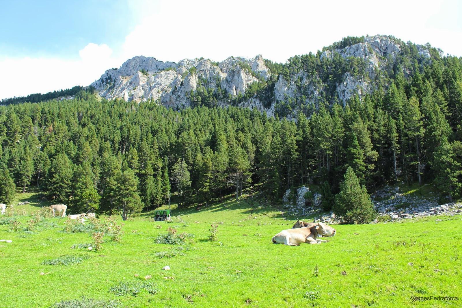 Coll de Pal Parc natural del Cadí-Moixeró Alt Berguedà Bagà