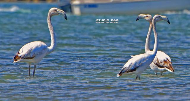 Πρωινοί ιπτάμενοι επισκέπτες στο Ναύπλιο