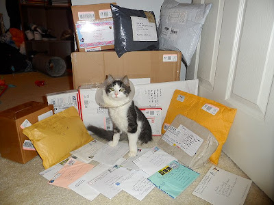 Anakin the two legged cat love for Ani mail