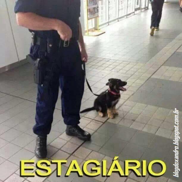 estagiario.png (612×612)