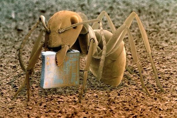Картинки по запросу Муравей с микрочипом