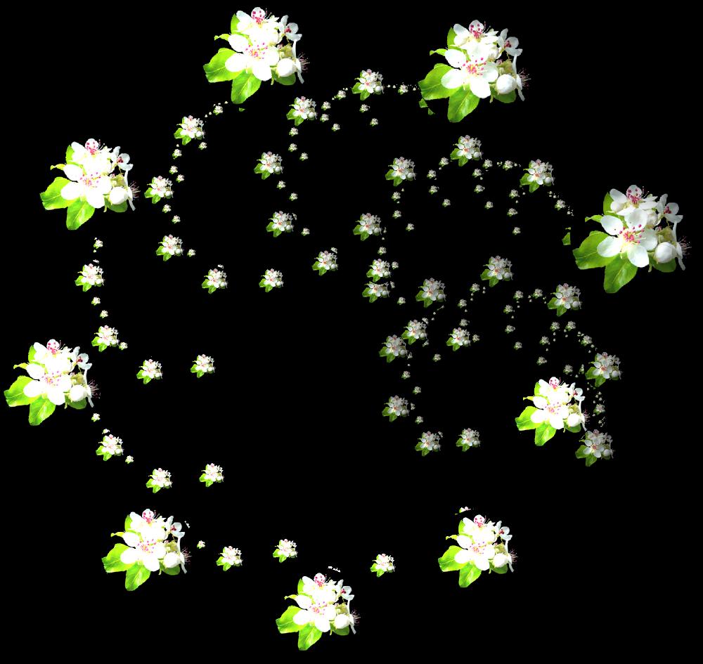 Acodero Graphisme: Incendia et fleurs de poirier