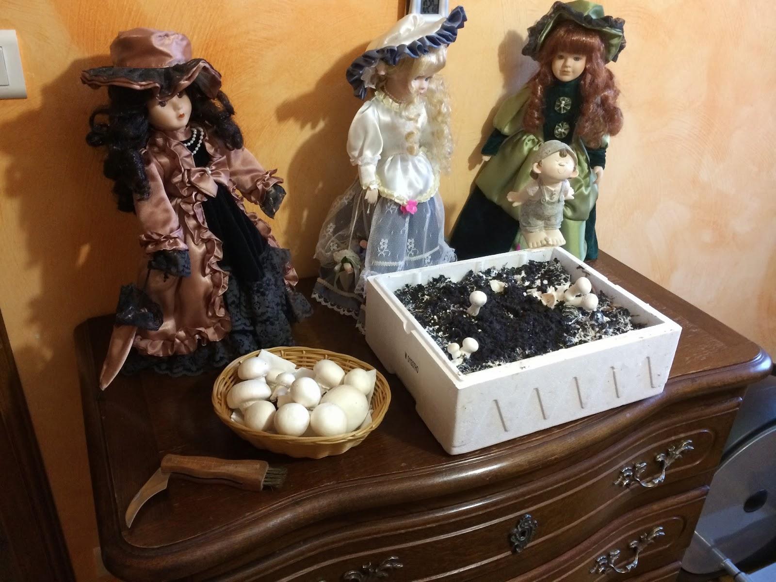 Comment faire pousser des champignons soi-même ? - Mon Blog Malin - Astuces conso, recettes ...