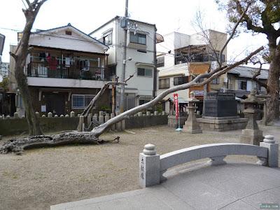 野里住吉神社の凄い木