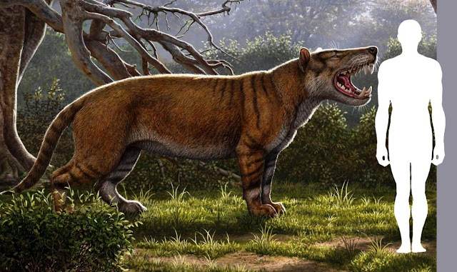 New Species of Giant Fossil Carnivore Found in Kenya