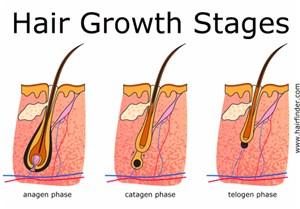 Mengontrol Pertumbuhan Rambut