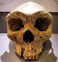 DISCOVERED the so called missing link.Believed to be Ancestral to modern humans. The Secret History of Homo Sapiens.