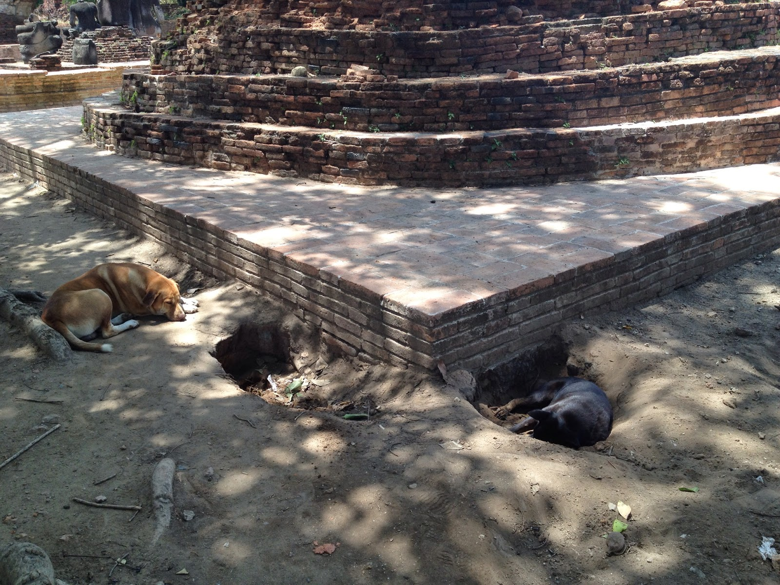 Ayutthaya - Dogs trying to stay cool in the heat