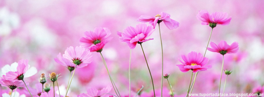 Portadas De Flores