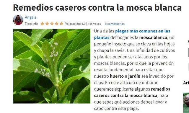 Mosca blanca el bons i y yo - Remedio contra las moscas ...
