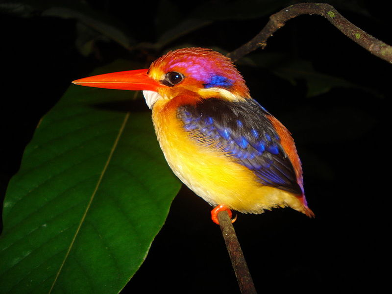 10 Most Extremely Colorful Small Birds For Pet