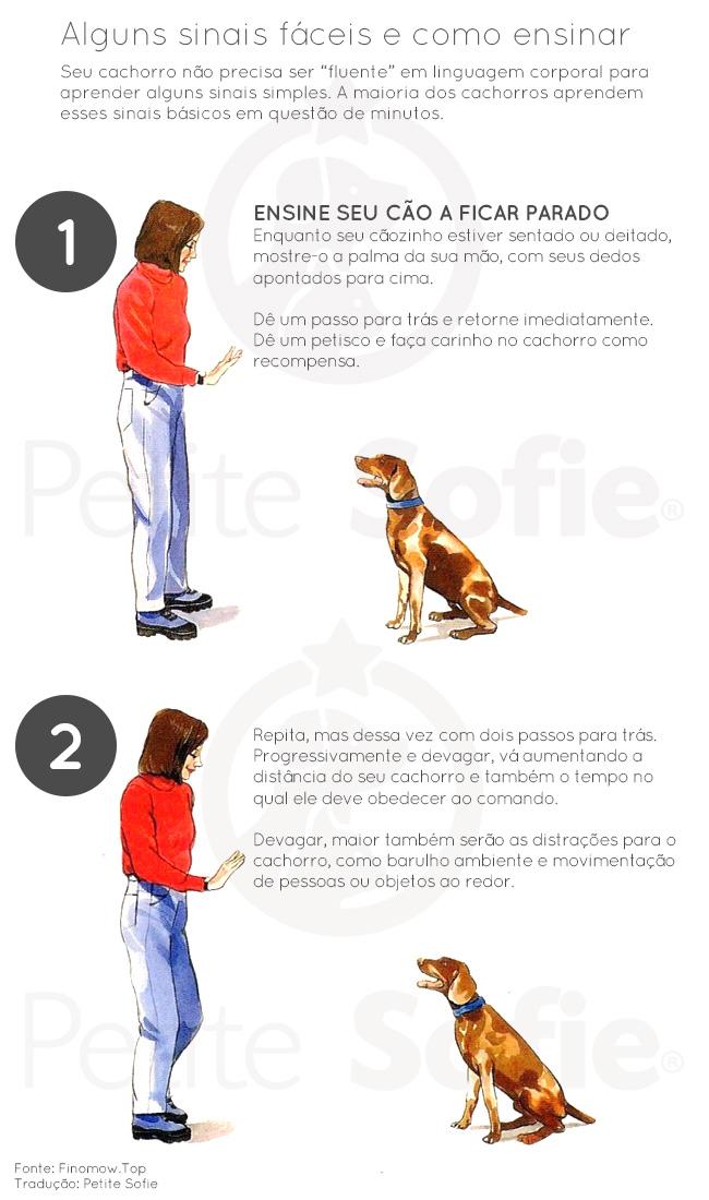 Como treinar seu cão utilizando sinais manuais