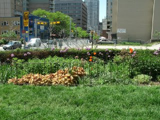 Paul Kane House garden bed facing west showing empty lot for new condo by garden muses: a Toronto gardening blog