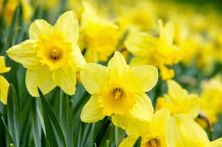 consulta florais de bach online