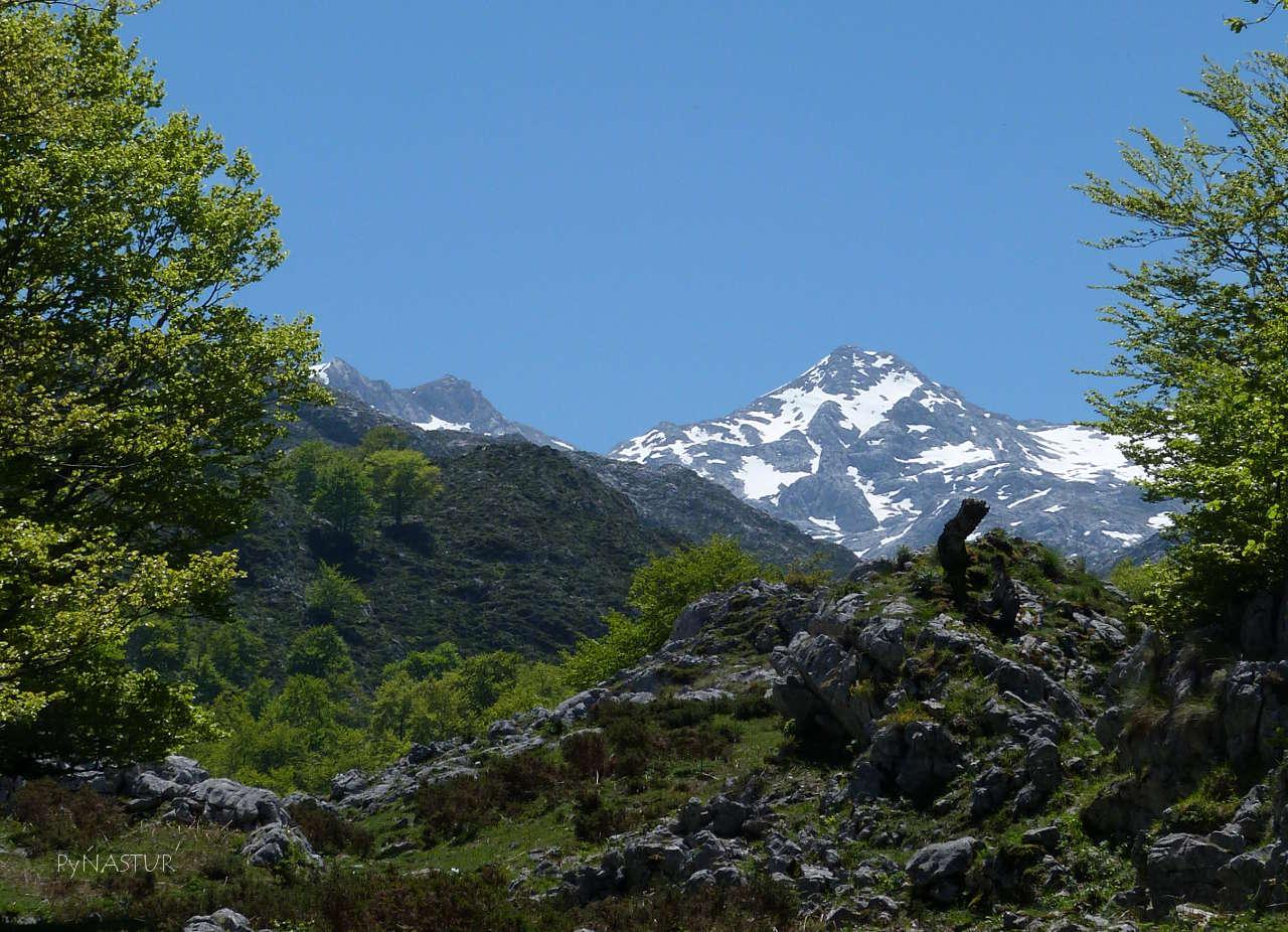 Picos de Europa desde el Hayedo Palomberu