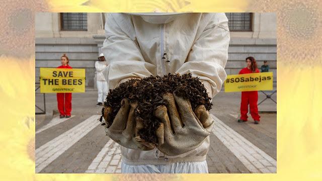 ¿Los neonicotinoides matan abejas?