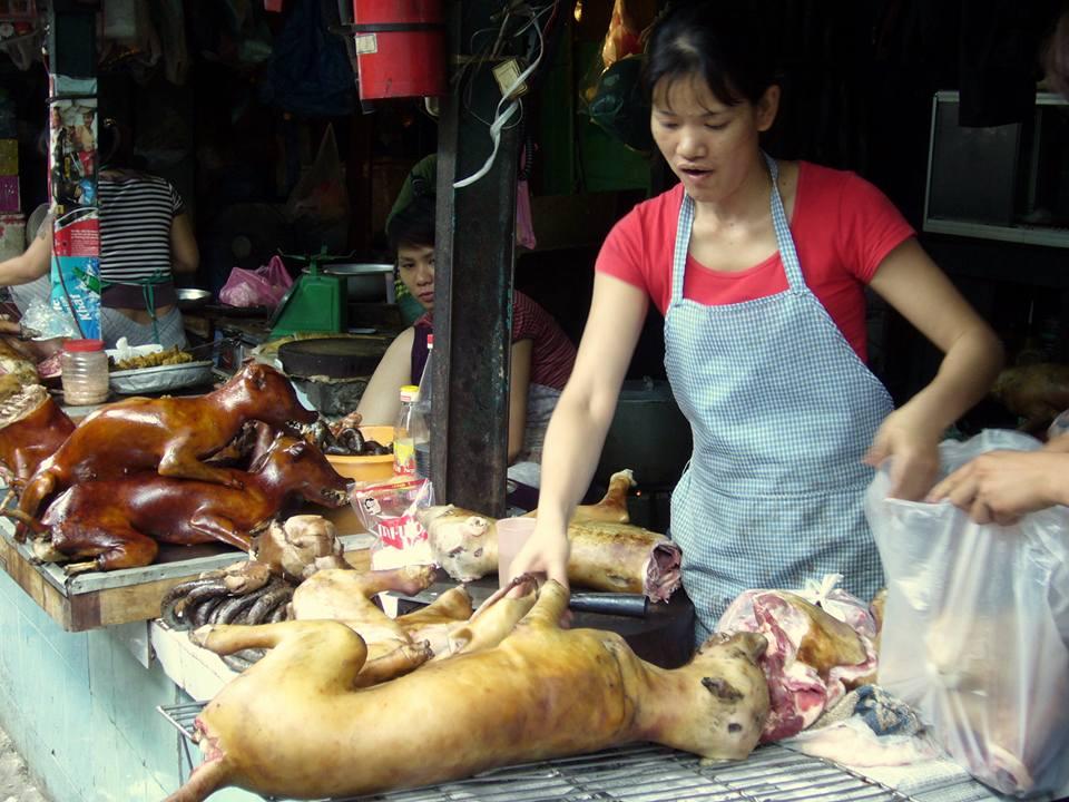 Foto Foto Terhadap Penyiksaan Anjing Yang Di Kelola ...