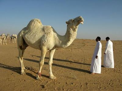 Gambaran-negeri-Saudi-arabia
