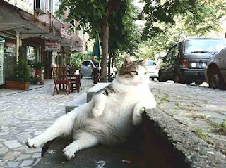 Cat resting on sidewalk
