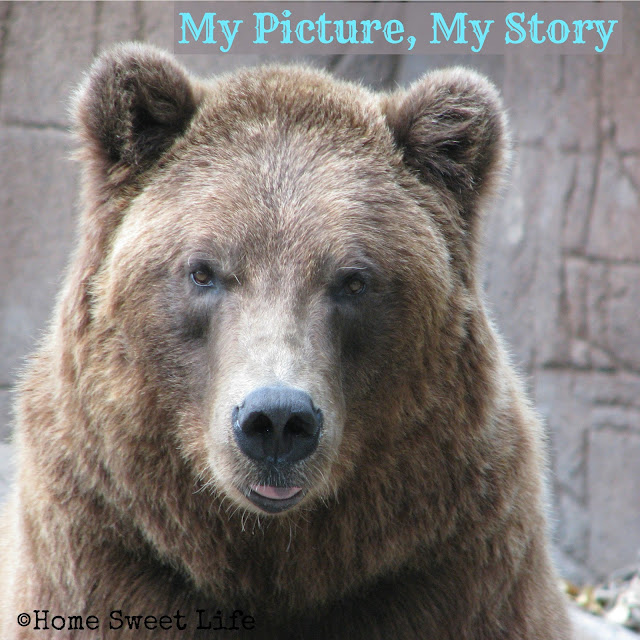 my picture my story, alaskan brown bear, Indianapolis zoo, memories