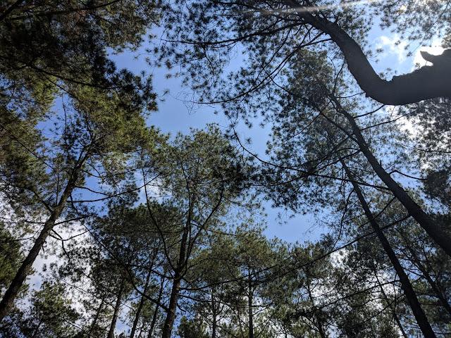 Menikmati Tantangan Berbeda ketika Tinggal di Hutan Grafika Cikole