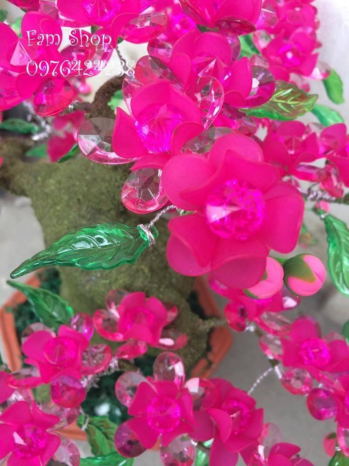 Canh hoa dao lam goc bonsai mai dao o Giang Vo