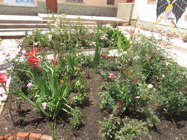 Der einsetzende Regen tat meinen Blumen gut