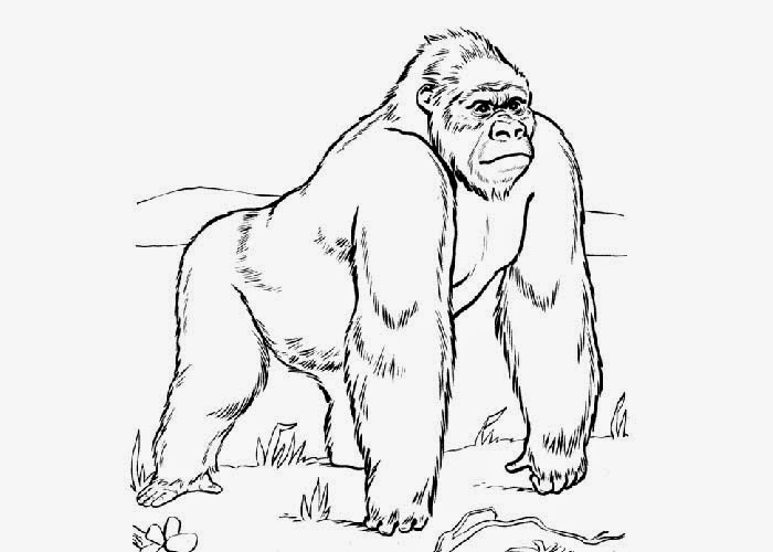 Funny Gorilla Coloring Page - Free Coloring Pages Online | 500x700