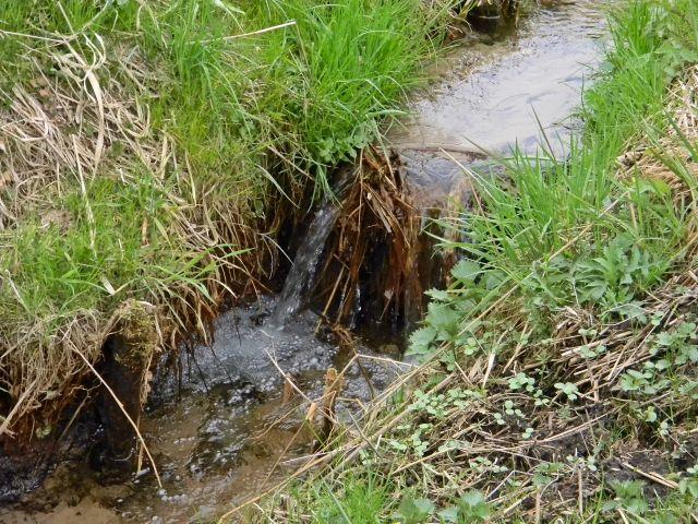 woda, rzeka, łąka, teren podmokły