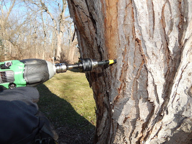 Drilling hole for maple suggaring