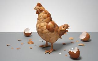 pupuk organik cangkang telur