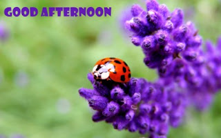 download good afternoon images