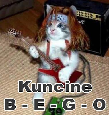 kucing lucu bermain gitar