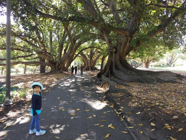 Mengunjungi Hyde Park Perth