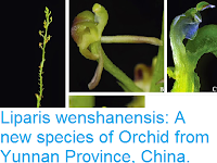 http://sciencythoughts.blogspot.co.uk/2015/05/liparis-wenshanensis-new-species-of.html