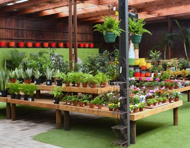 Best Pallet Garden for Your Beautiful Plants
