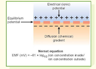 Diffusion Of Current-Carrying Ions