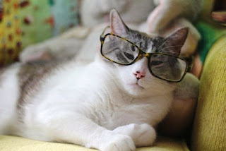 Gratis Gambar Kuicng Pakai Kacamata Terlihat Lucu