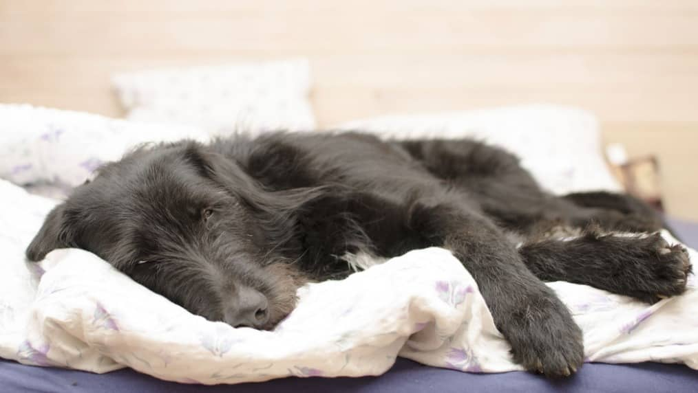 Signs of Pancreatic Cancer in Dogs