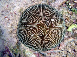 Corales Hogos información